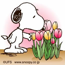 Tulips! A wonderful reminder of Spring and Easter, loved even by the sweet beagle Snoopy, Charlie Brown's friend / dog, created by cartoon writer Charles Schultz.. #DdO:) MOST #POPULAR RE-PINS - https://www.pinterest.com/DianaDeeOsborne/easters-exciting-expectations/ - EASTER'S EXCITING EXPECTATIONS. A greeting card / Clubhouse.