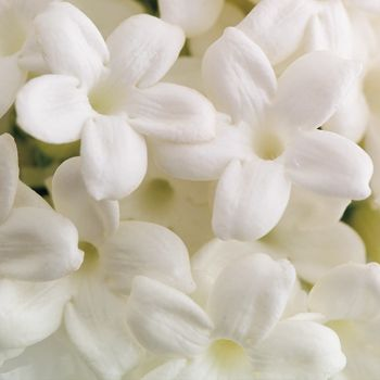 173 best white flowers images on pinterest white flowers stephanotis flower means marital happiness i love the waxy thick petals im so happy it was in my beautiful bouquet mightylinksfo