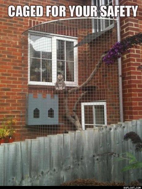 Balkon i okno dla kota w jednym :)