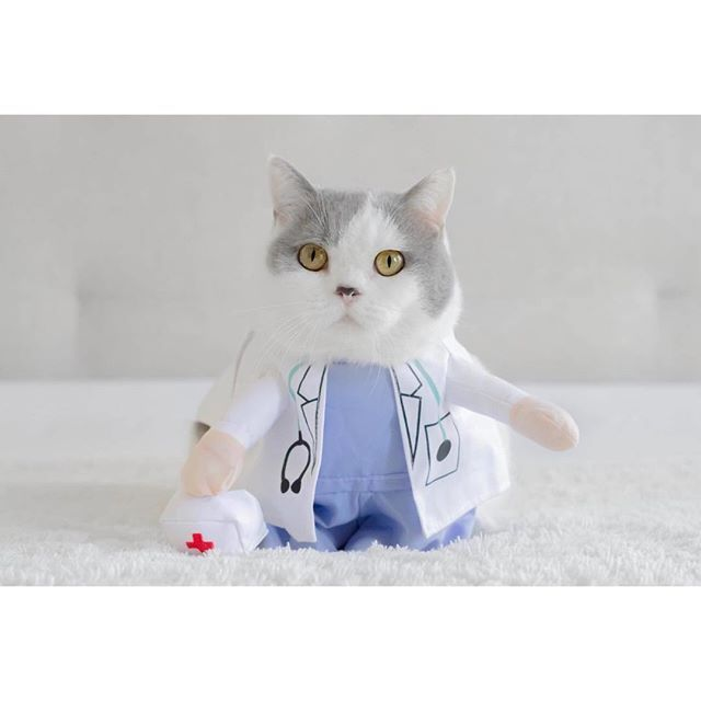 After completing his degree online to become a doctor Butler set off to find his first patient.  .  Thanks for @anniepaddington costume show💕  .  👨🏻⚕️Pet Doctor Costume👨🏻⚕️