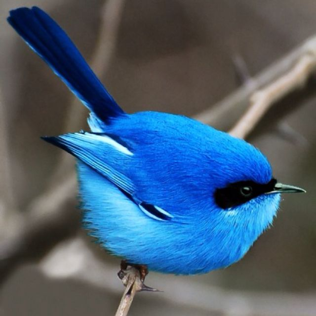 The bird I'm looking for, such beautiful blue colors.