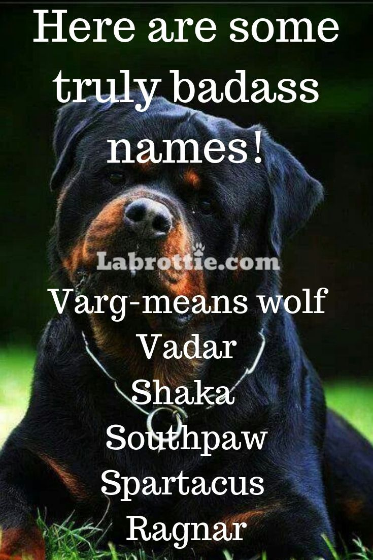 400 Boy Dog Names A Z Dog Names Boy Dog Names Badass Names