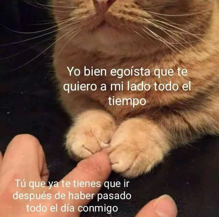 Gato #remediosfrases