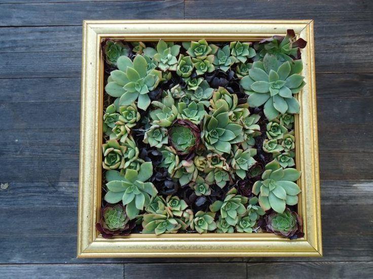 mur végétal DIY en cadre décoré de plantes succulentes
