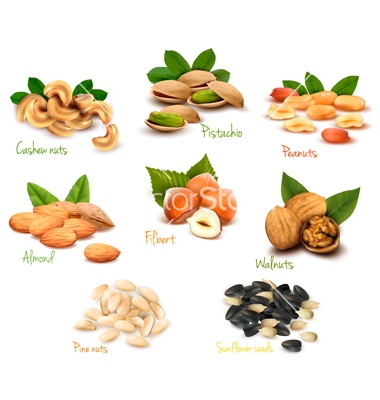 Mega collection of colorful nuts vector 899812 - by ecco on VectorStock®