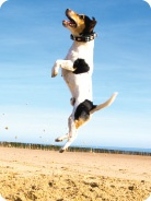 Joint Mobility - Fish4Dogs Online Shop