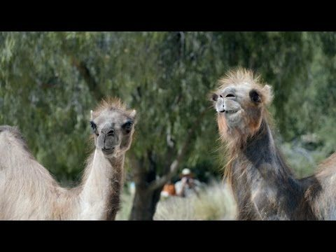 Ad of the Day: It's Hump Day All Over Again in Geico's New Commercial | Adweek