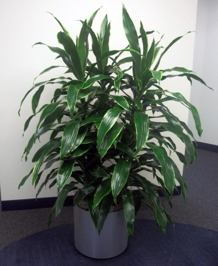 design by creative interior plantscapes indoor plants
