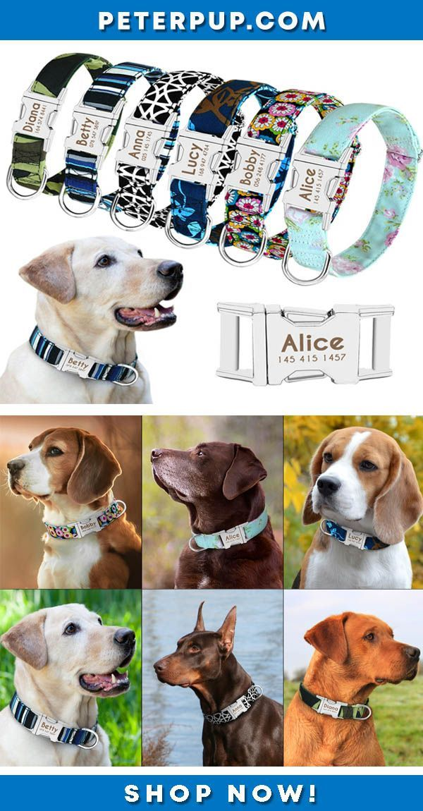 Finding A Custom Dog Collar This Beautiful Personalized Dog