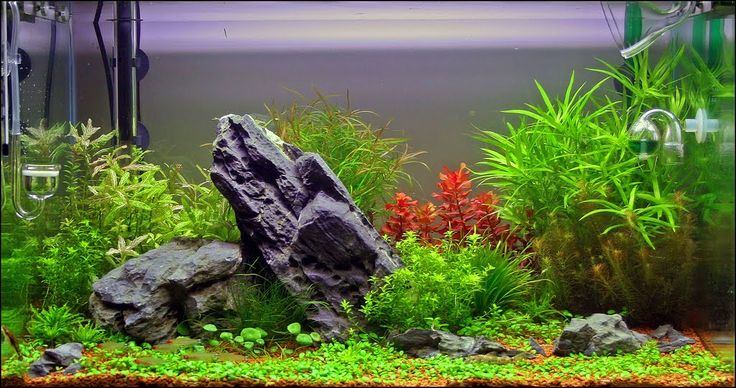 Live plants for nature aquariums the planted aquarium for Growing plants with fish