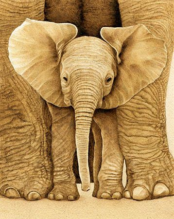17 best ideas about Baby Elephant Drawing on Pinterest   Draw ...