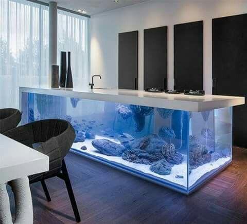 Pia aquario