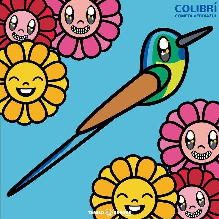 Un maravilloso Colibrí Cometa Verdiazul!!! --- #tamiloburgosstudio #colibri #humminbird #flowers #birds