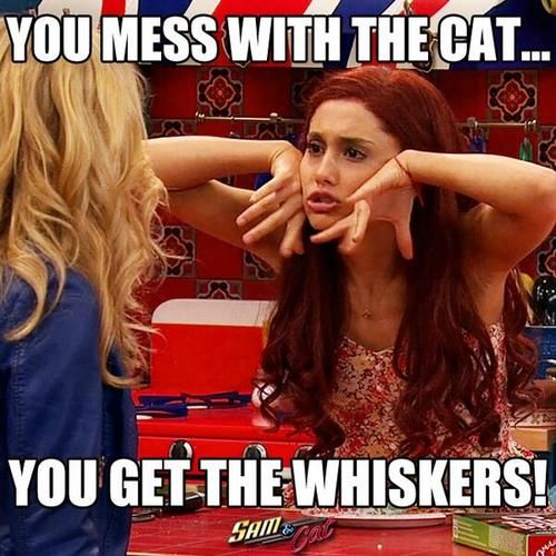 it make my laugh when ariana grande said you mess with the cat and you get the whisker