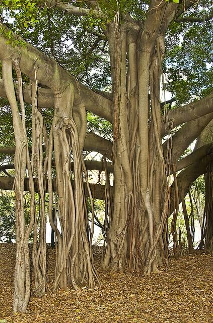 One breathtaking kind of tree!!