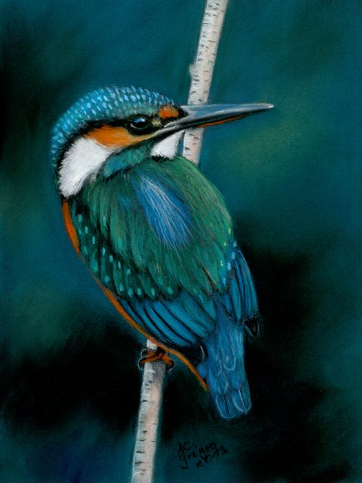 Kingfisher by a.c. griehl-groß art-ist-art.com