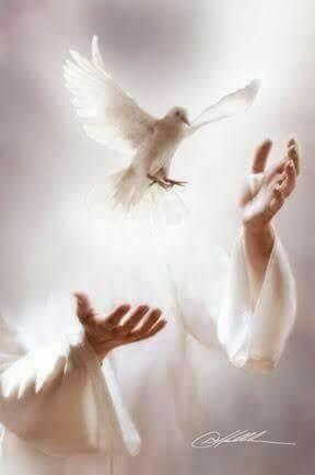 Jesus sends us a peace dove  <3 Jesus sendet uns eine Friedenstaube