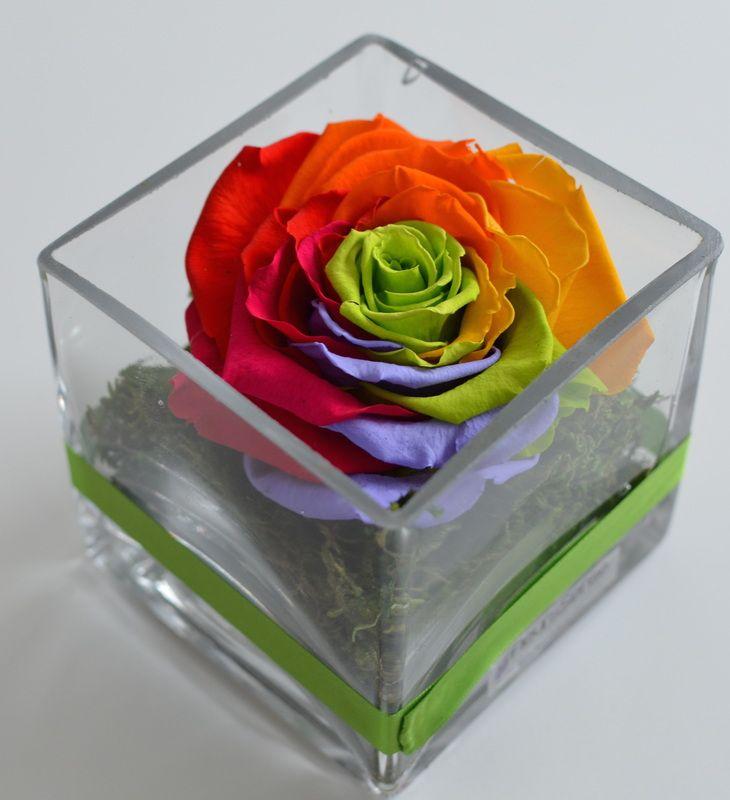 Preserved Roses - Fleur&Sense