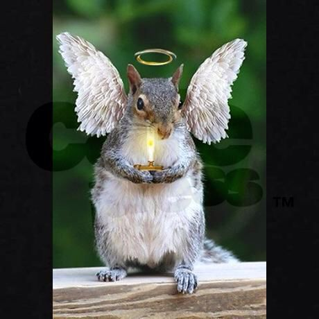Best Squirl Images On Pinterest Funny Squirrel Book Jacket - Squirrel photographed in heroic pose becomes star of hilarious photoshop battle
