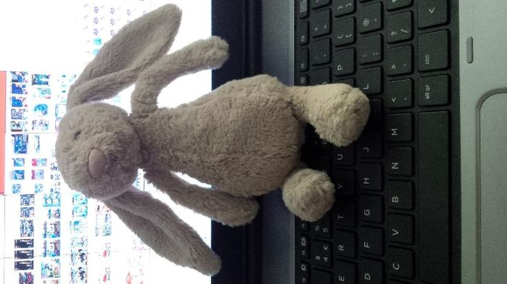 Pin by Teddy Bear Lost and Found on SOUTH EAST UK LOST