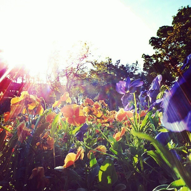 flower with lens flare.