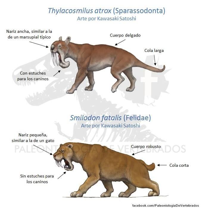 420 Animals Ideas In 2021 Animals Prehistoric Animals Prehistoric Creatures