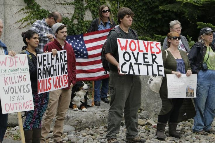 Remaining Members Of Washington Wolf Pack Near Idaho