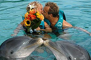 With its pristine white beaches and stunning turquoise waters, the Bahamas has long been a popular choice for weddings. But if you don't mind getting wet, skip the idyllic beach setting and share your love and kisses with the dolphins. While the ceremony takes place on a floating platform, the highlight is the presentation of the rings by the dolphins. Afterwards, the entire life-jacketed bridal party is then invited to join you as you celebrate your betrothal by swimming with the dolphins.