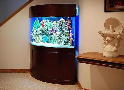 Best 25 Corner Aquarium Ideas On Pinterest Vivarium