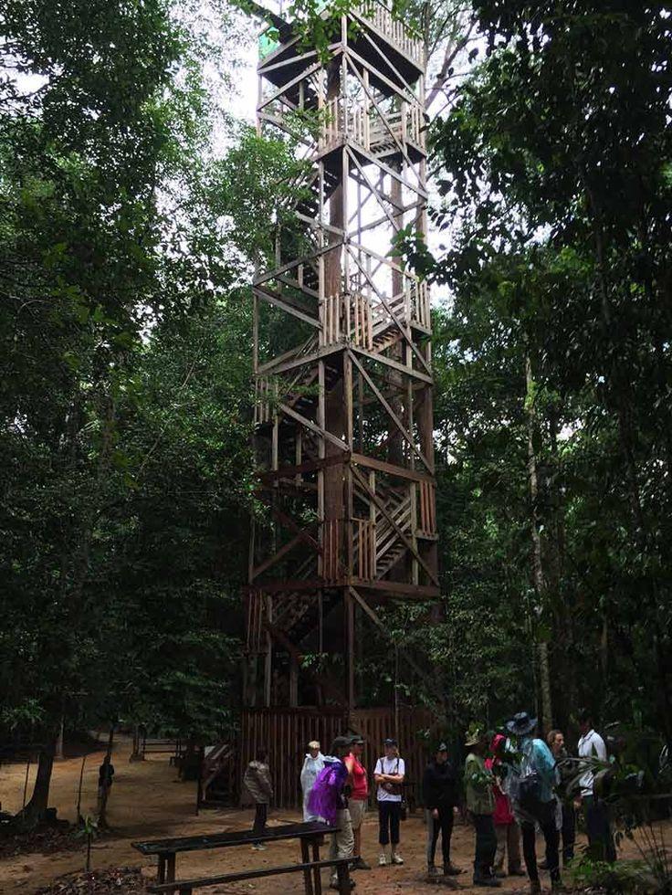 Balikpapan Rainforest Canopy Walk | Borneo Travel
