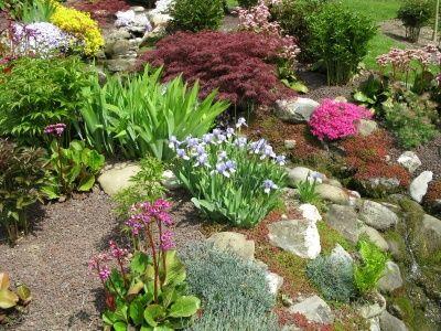 rock garden plants   Plants for Rock Gardens, Rock Flower Garden, Perennial Plants