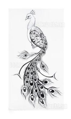 Pencil Drawings Of Peacocks Easy pencil drawings