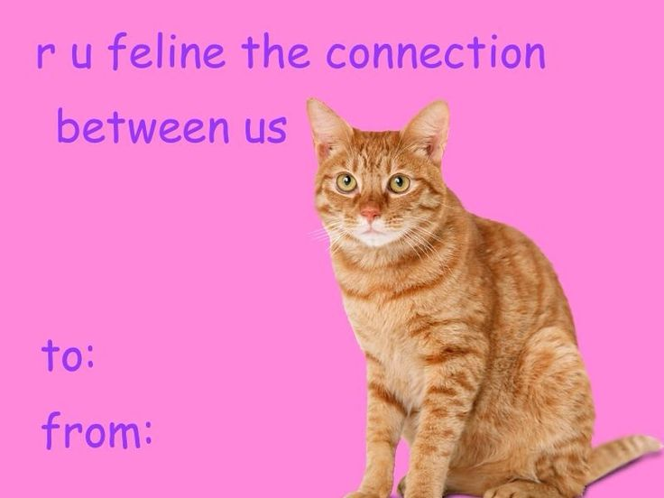 Cat Valentine S Day Card Tumblr Funny Valentines Cards Valentines Memes Meme Valentines Cards