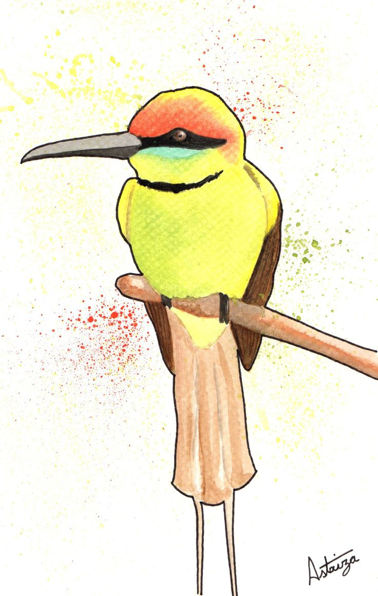 Acuarela - Bee eater