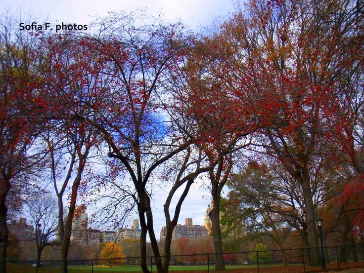 Autumn - NYC!!!