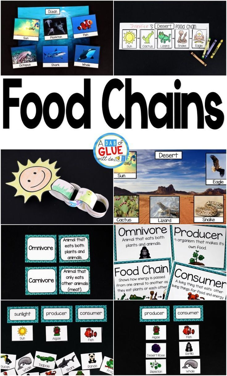 Food Chains Food chain activities, Science activities
