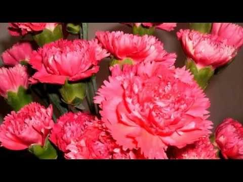 Flor Cravo - YouTube