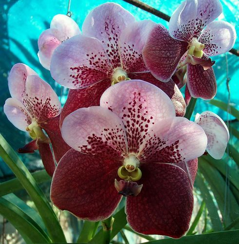 most beautiful orchid flower | The Most Beautiful Orchids in the World | Orchid Flowers Growing and ...