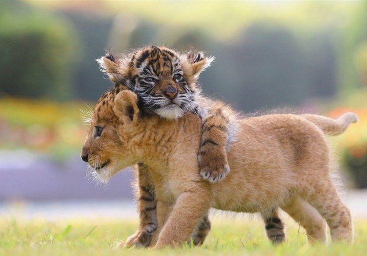 Someone Who Needs a Hug.