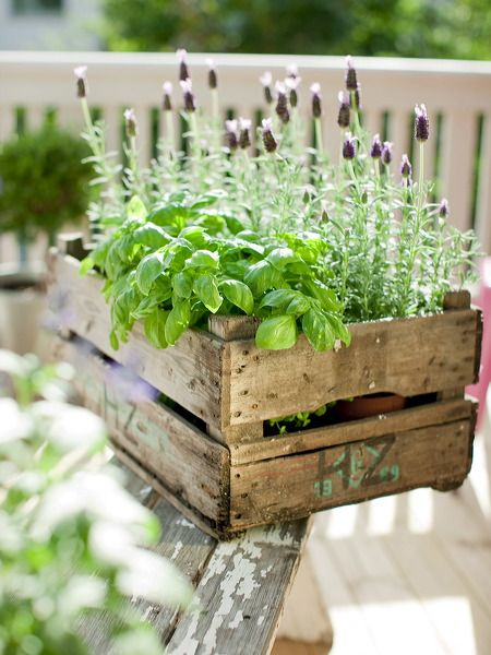 Simple crate herb garden.