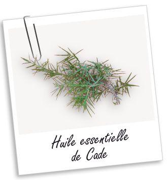 Connue comme parasiticide, cette huile est utilisée en cas d'affections de la peau comme la gale. Elle est aussi très utilisée comme soin des cheveux et du cuir chevelu, et rend les cheveux forts et brillants.
