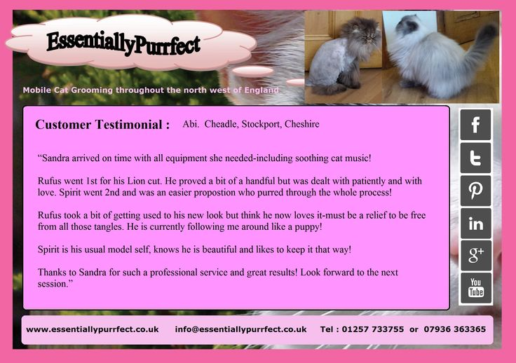Customer Testimonial of EssentiallyPurrfect #mobile #Persian #Himalayan #cat #catgrooming service.  Abi #Cheadle #Stockport #Cheshire