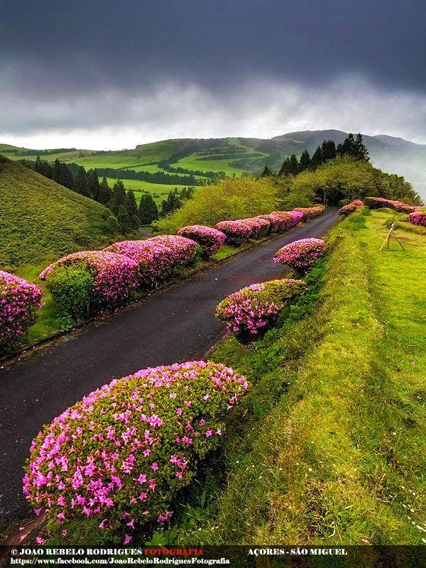 Way Through The Forest Reserve of Pinhal da Paz, São Miguel Island, Azores Portugal