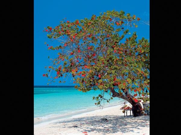 Negril Hotels - RIU - Negril Jamaica Hotel Resorts