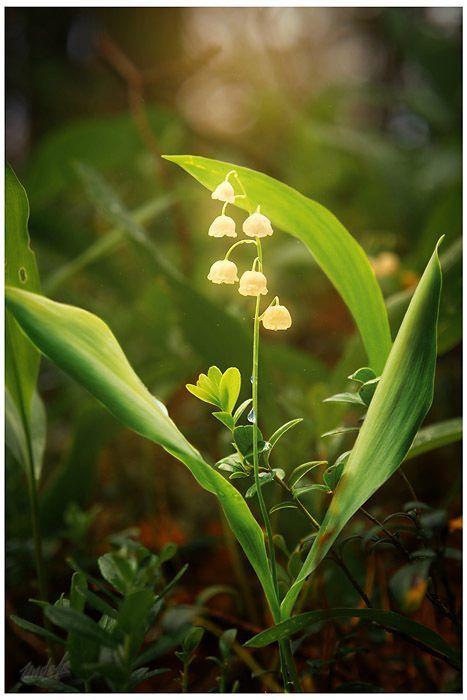 Fairies dancing around these flowers.