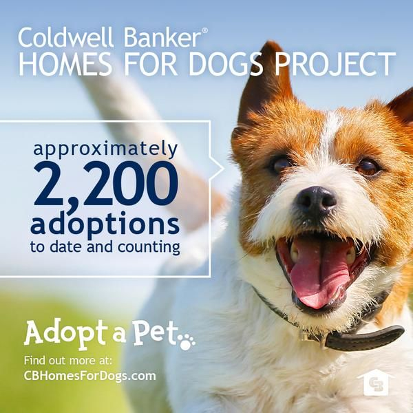 Everyone is barking about how Coldwell Banker and Adopt-A-Pet.com have found homes for 2,200 dogs so far! #HOMEROCKS - Coldwell Banker has committed to help find 20,000 homes for dogs in 2015 through Adopt-A-Pet. We're on our way!!