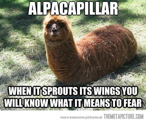 Alpacapillar . Alpacafly would be soooooooooooooooo scaryyyyy . !!!! I think  would die just from seeing one .