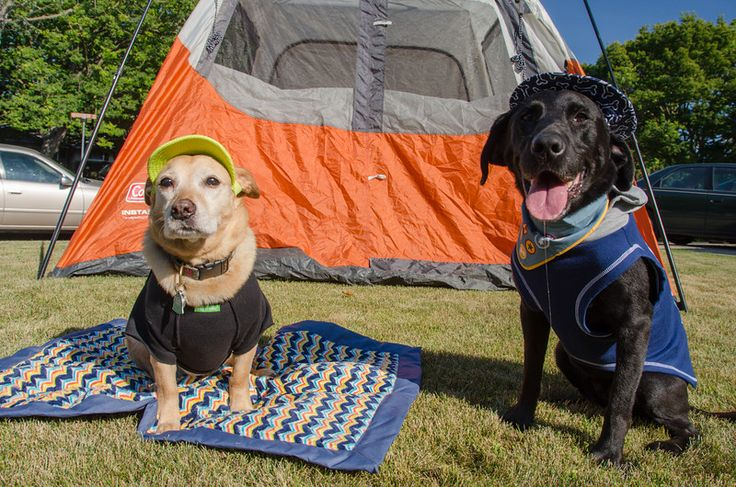 Tips for Camping With Dog: This Is A Great And Comprehensive List...Click On Picture...