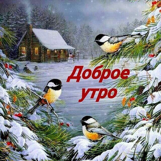 картинка с добрым утром зимние со снегирями отправился поселок шабры