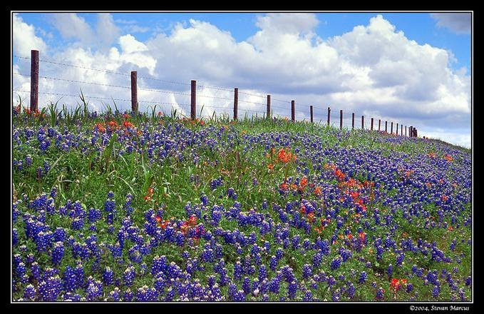 The Texas Hill Country during Bluebonnet time....lovely!